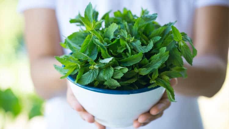 baharat ve bitki